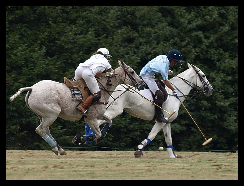 Encore des chevaux : tournoi de polo au Chef-du-Bois à La Forêt-Fouesnant Image76