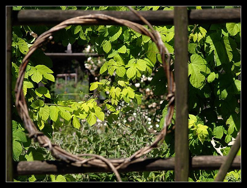 Vos plus belles photos du mois de juin 2009 Image28