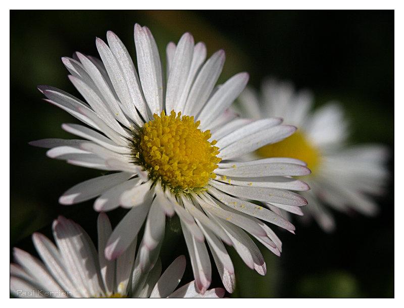 Vos plus belles photos du mois de mars 2009 Image28